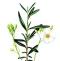 University Herbarium